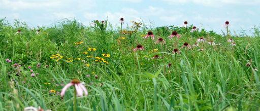Summer at the Prairie
